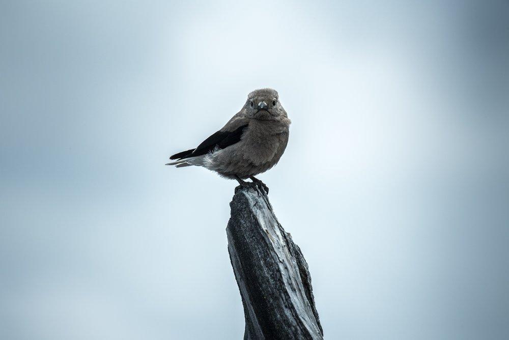 Bird Alone c nathan-anderson-on Unsplash.jpg