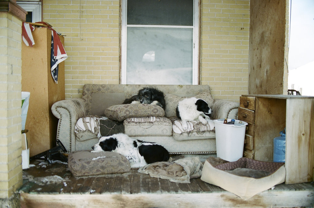 5 -- Cow dogs resting on the porch.jpg