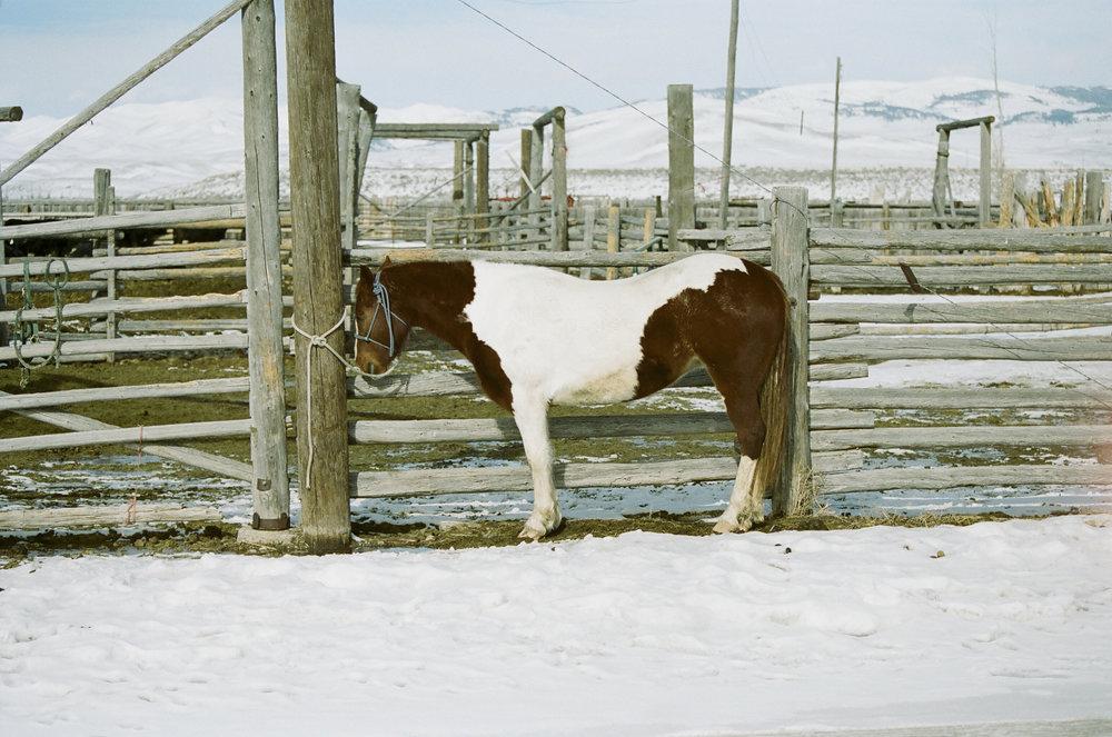 6 -- Paint horse.jpg