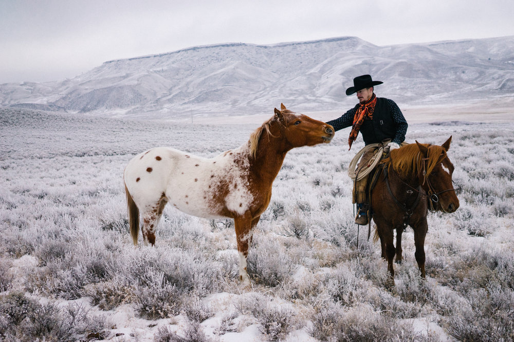 11 - Out checking an Appaloosa stud colt.jpg