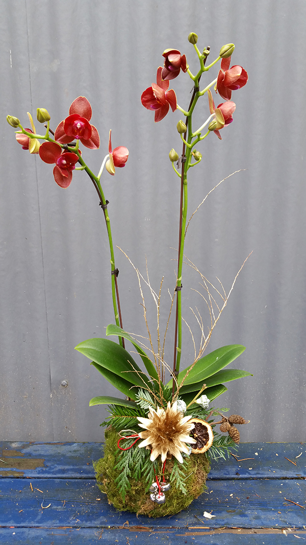 Botanical floral arrangement with red orchids