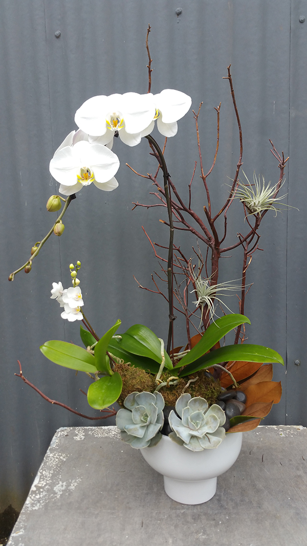 Botanical arrangement with white orchids