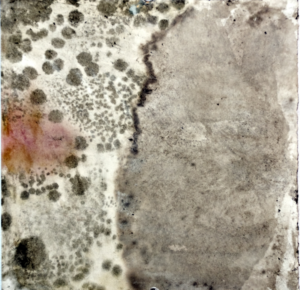 Balci.Selin. Boundary (detail I). Microbial growth on paper.16x20 in framed.2011.JPG