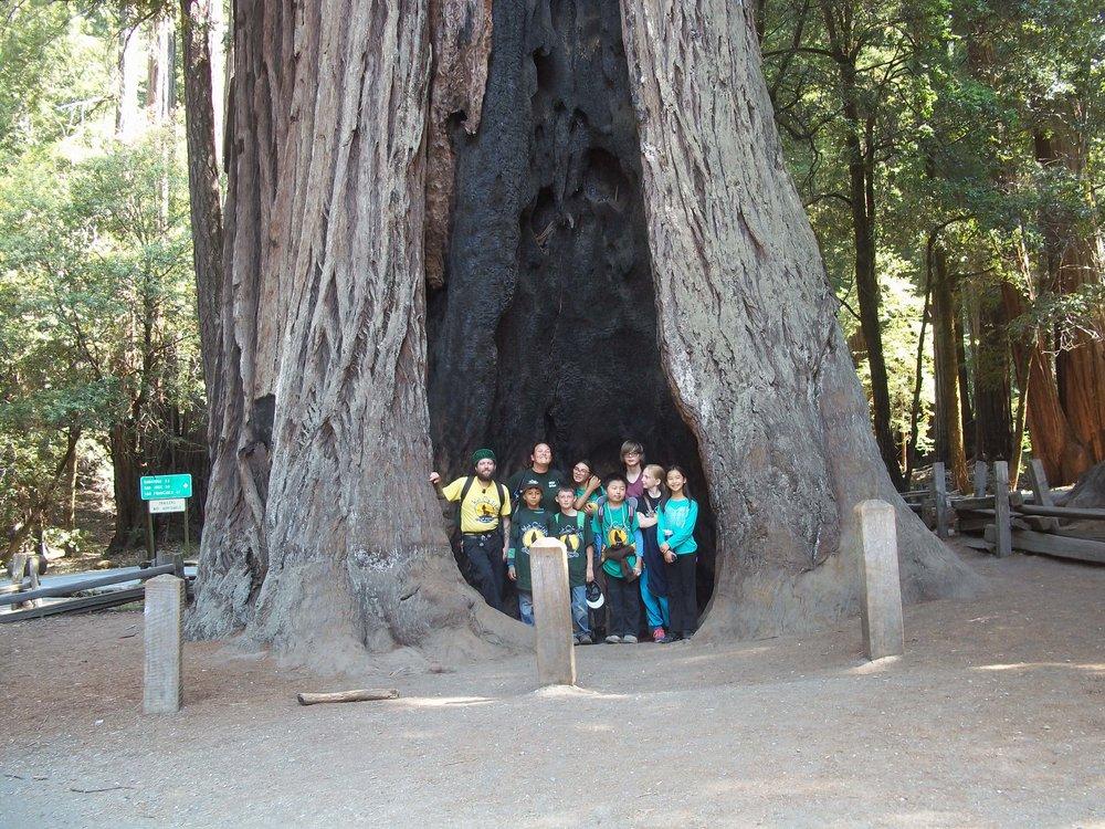 WOLF School Summer Camp_Kids in Redwood Tree.JPG