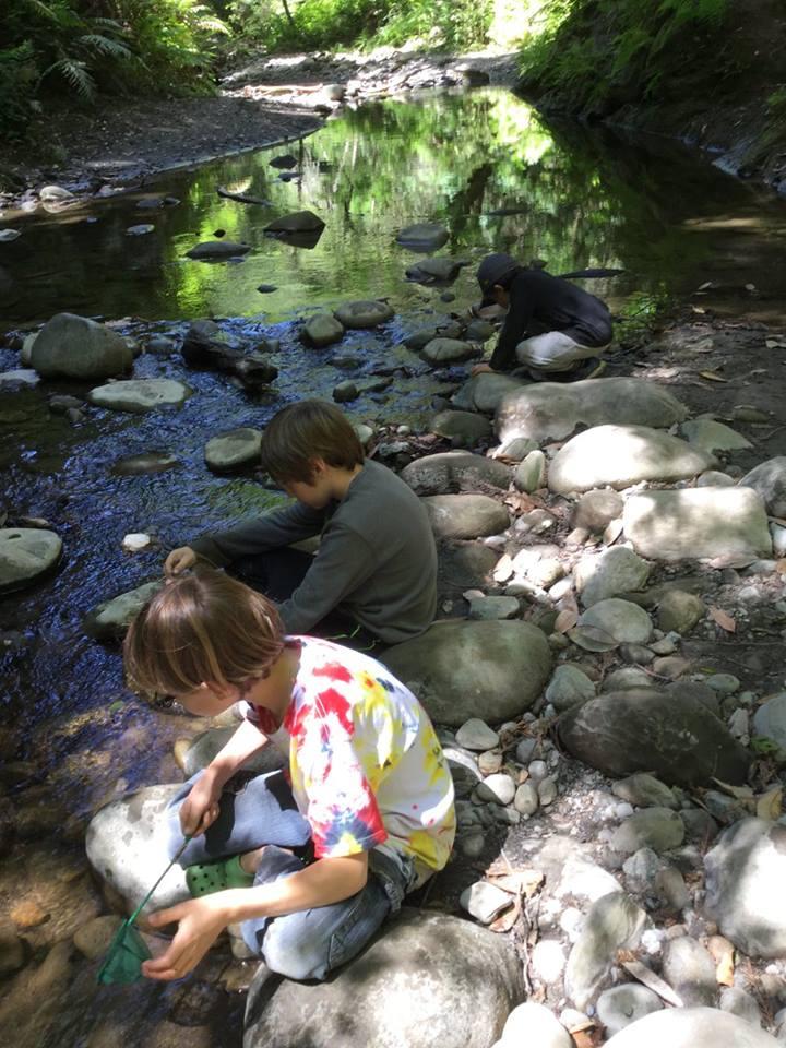 WOLF School Creek Study During Outdoor Science School.jpg