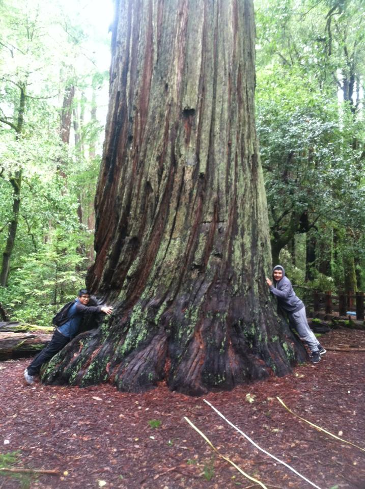 WOLF School Students Hugging a Redwood at Big Basin.jpg