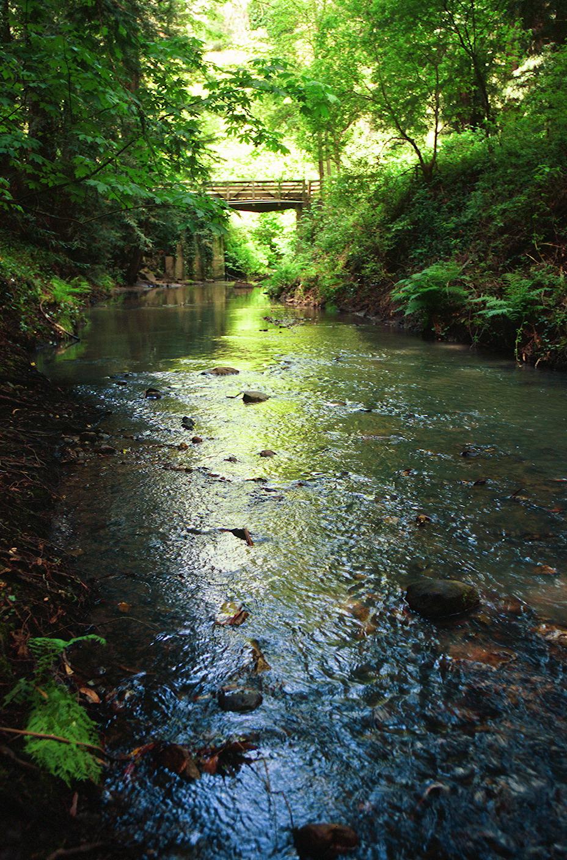Creek3 (1).jpg