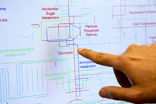 Metabolic pathways targeted by granzyme-B