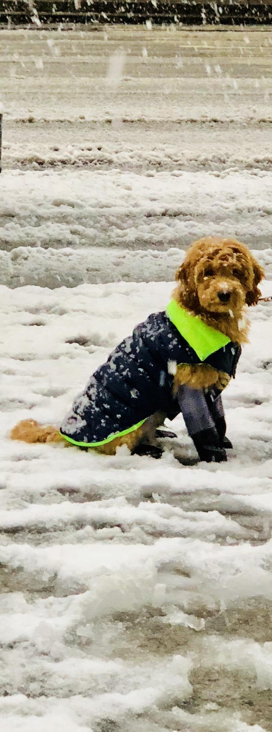 snowdog 1.jpg