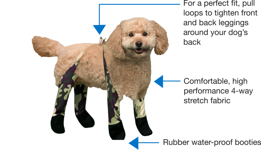 Dog_InfoGraphic_About_WalkeePaws.png