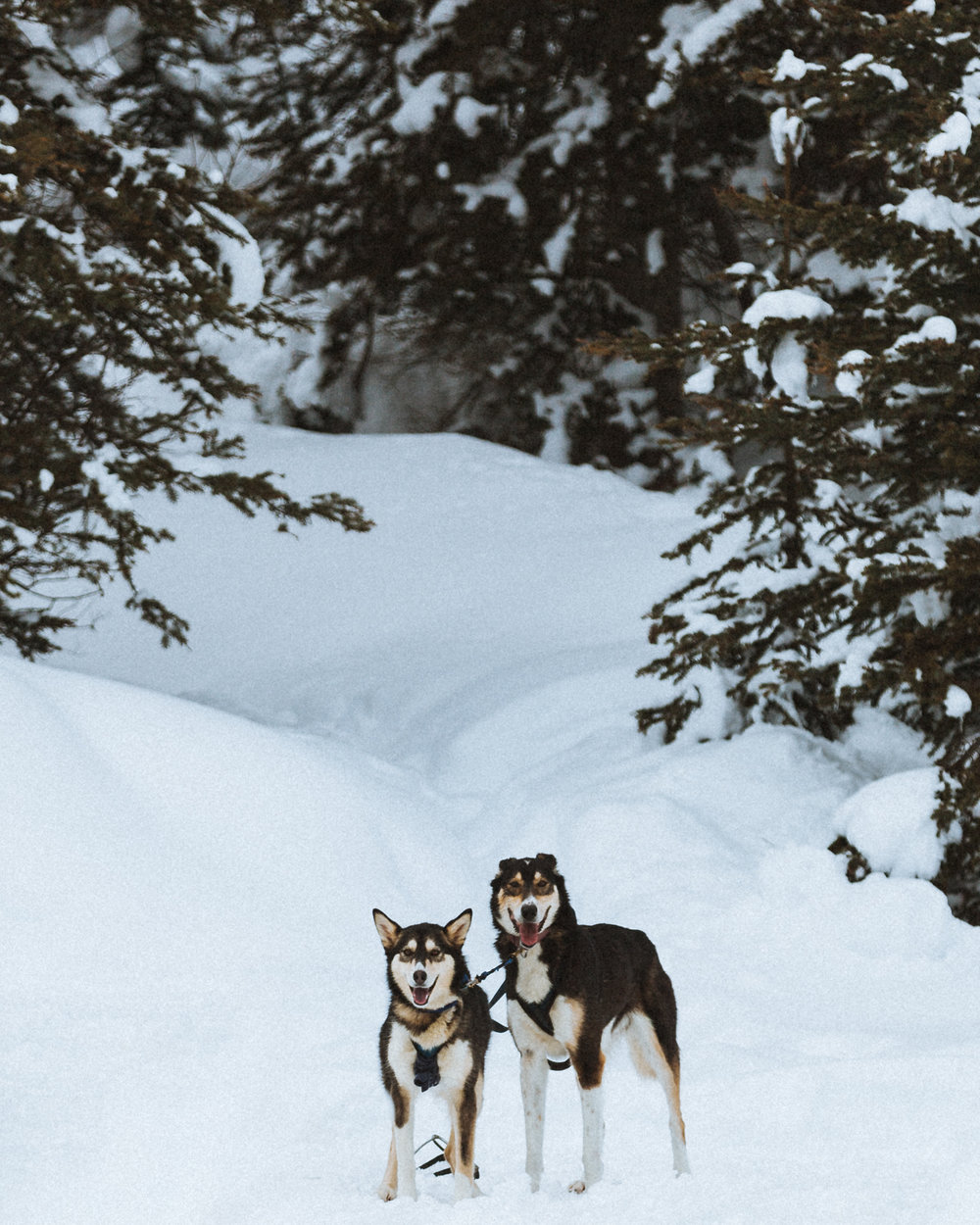 Two mushers I found at the continental divide trail