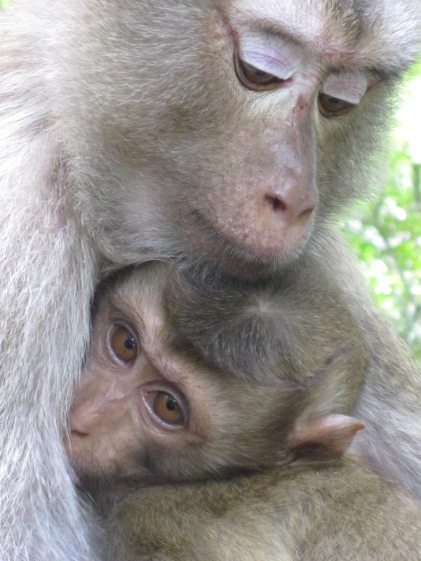 These macaques allowed met to get surprisingly close. A baby and his mother while hiking in a national park.