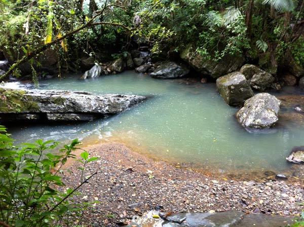 Jungle oasis.