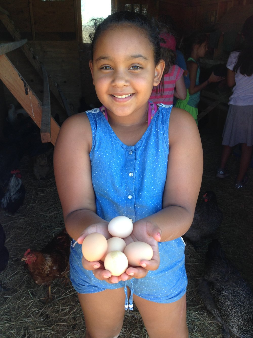 """""""My child learned that chickens have different color eggs such as green and blue."""""""