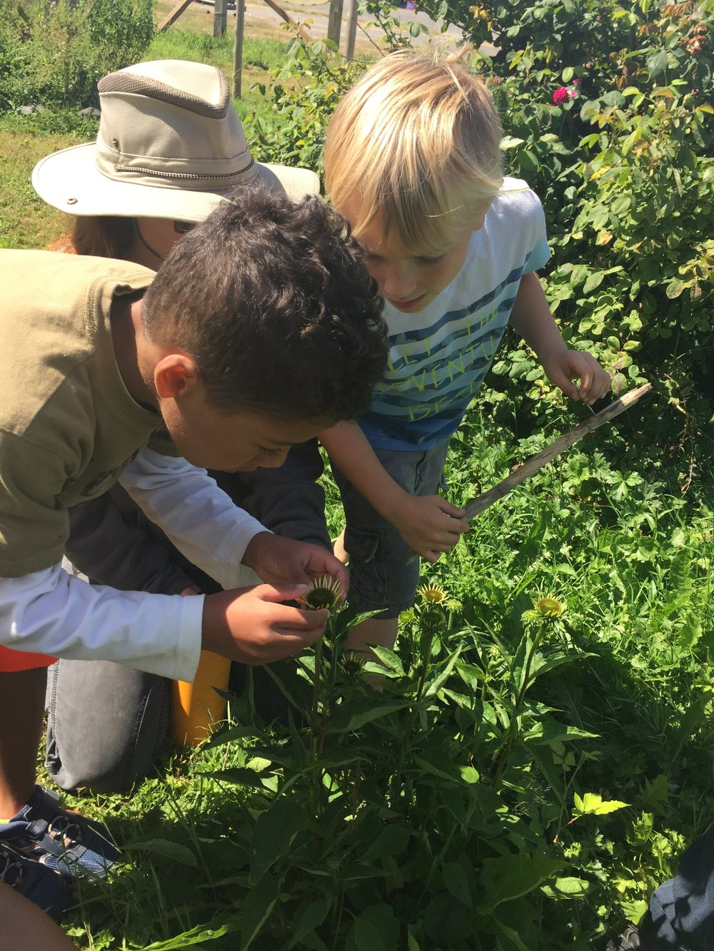 """""""Our son learned what incredible variety there is in our food system that isn't always readily available in commercial markets."""""""