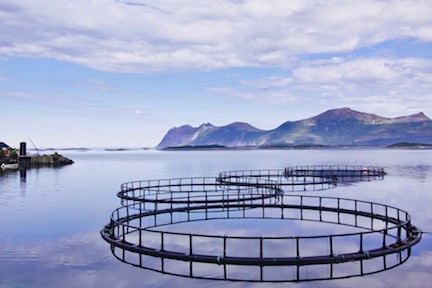 An aquaculture system similar to those used by RR (Source: Shutterstock)