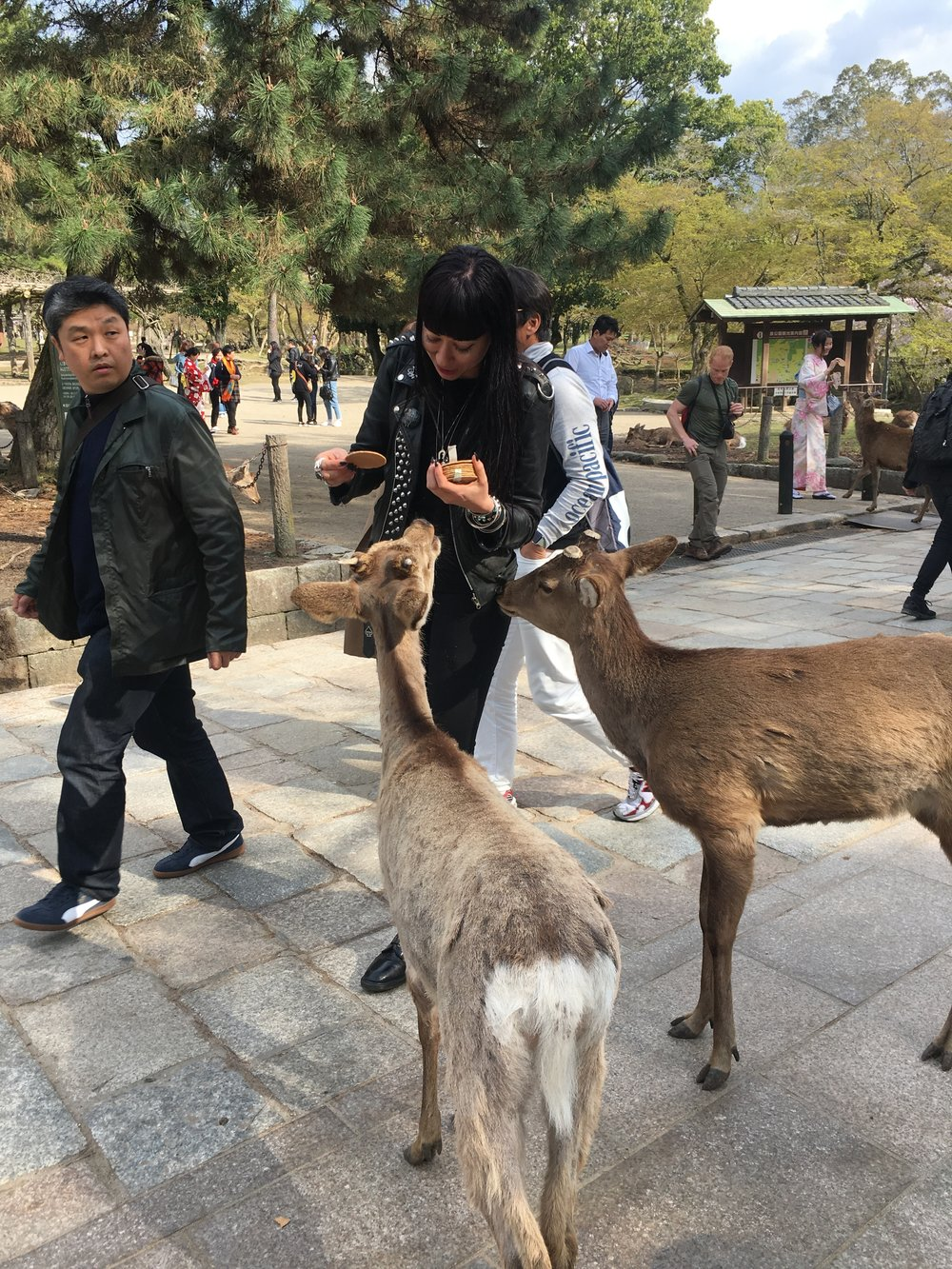 Getting checked out & feeding deer in Nara