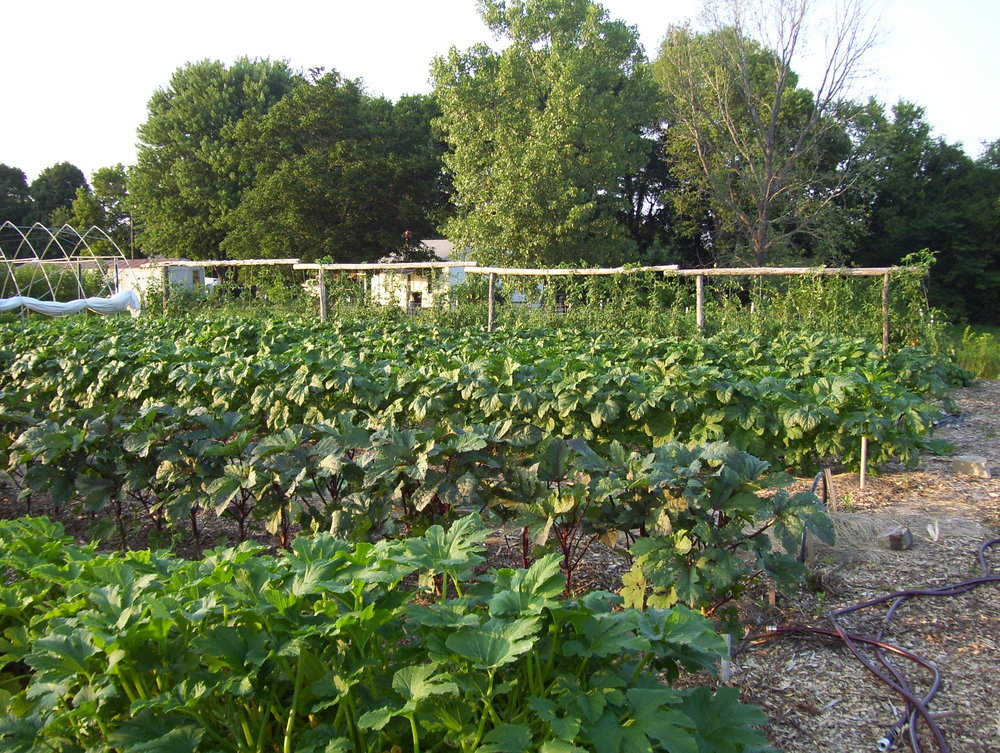 CedarRing okra and squash photo.JPG