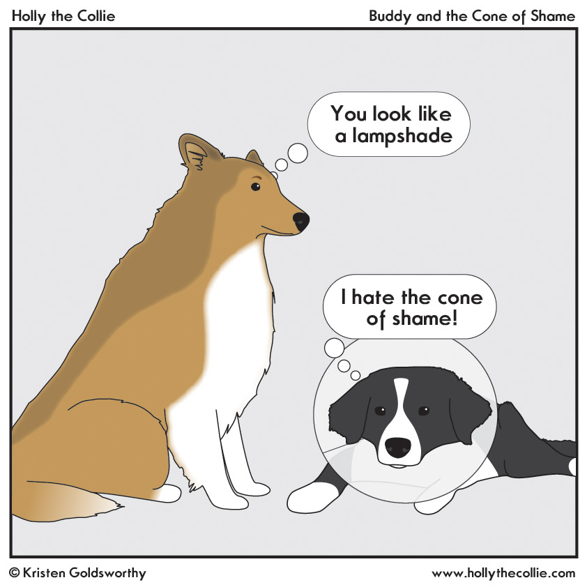 buddy and the cone of shame holly the collie