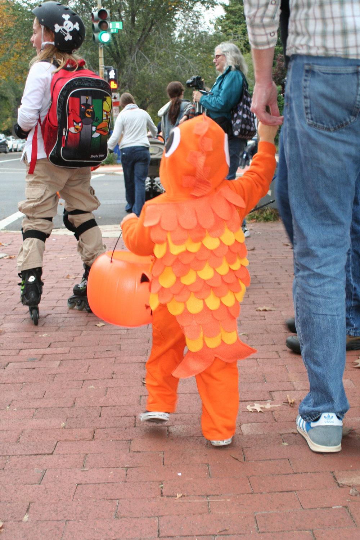 Halloween 2013 - Goldfish