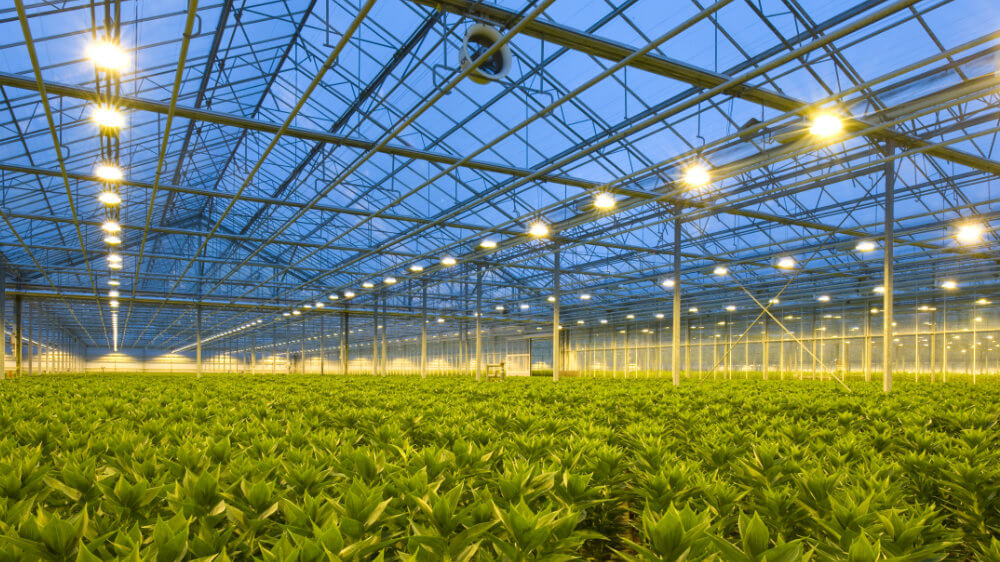 products-hordiculture-greenhouse.jpg