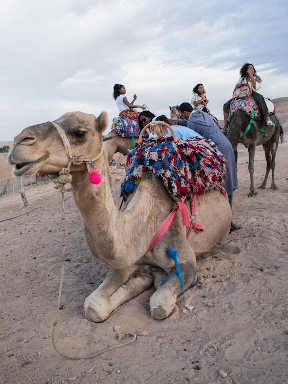 Marrakech-Camel-Ride-7.jpg