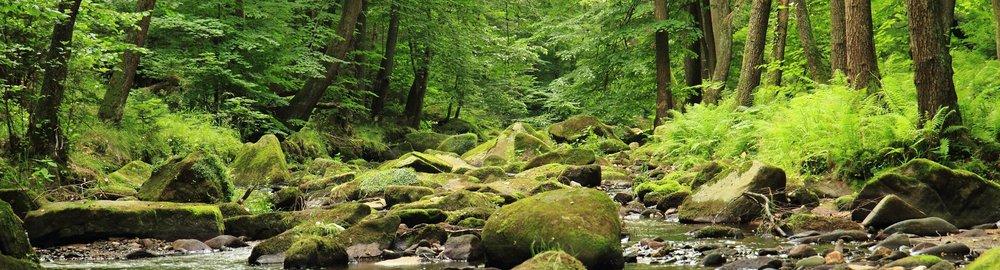 forest mossy rocks.jpeg