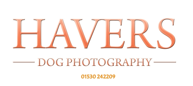 Havers Dog Photography