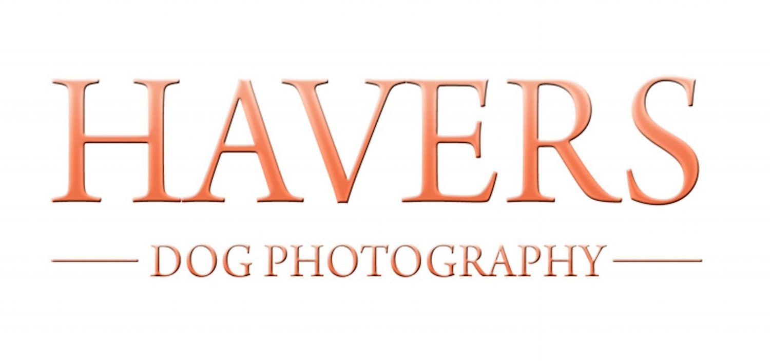 Havers Dog Photography Leicester