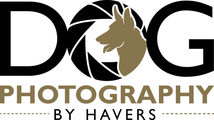 Dog Photography by Havers