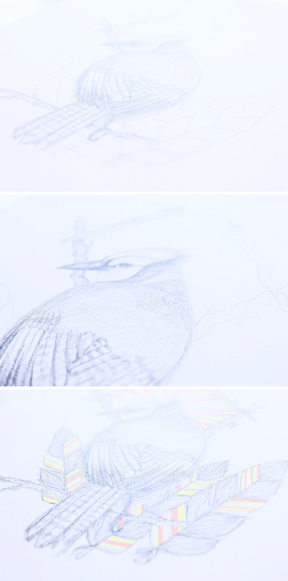 Drawing a bird, process photos!