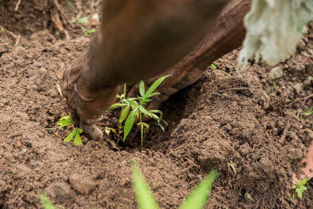 Dominica farmer / Wildlife