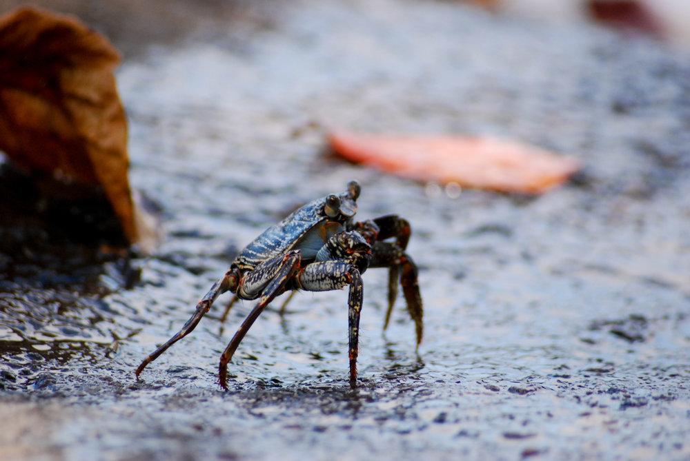 Crab Zagaya / Wildlife