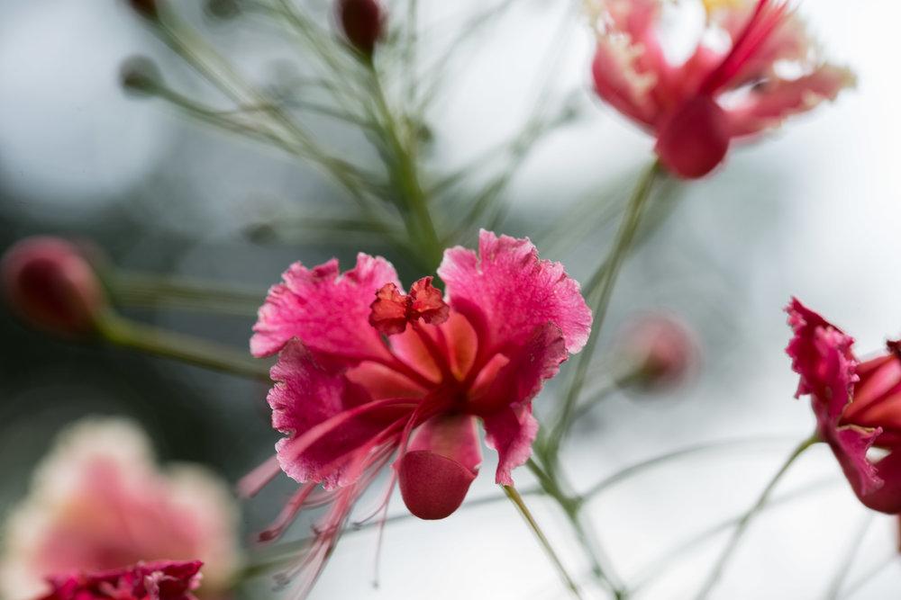 Flower 1 / Wildlife