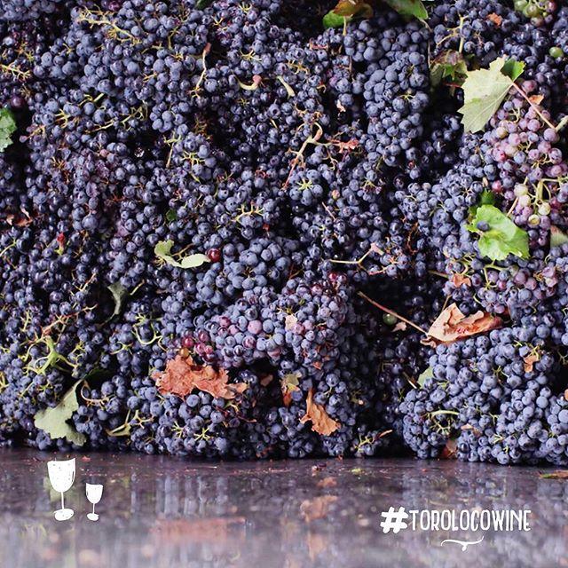 Harvested with love 💞🍇 #toroloco #torolocowine . . . . . . . . . #winelover #lovewine #harvest #vendimia #utielrequena #doutielrequena #drinkstagram #spanishwine #wine #vino #wein #vinho #winegeek #spain #españa