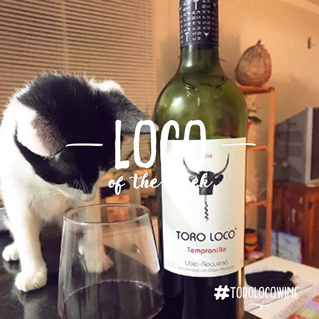 [LOCO OF THE WEEK] Thanks to @minou.miu for sharing Toro Loco Superior with his cat 😸 Tag us or use the hashtag #torolocowine to be featured next week ! #toroloco #locooftheweek . . . . . . . . . . #wine #vino #wein #vinho #winelover #catlover #cat #catandwine #drinkstagram #spain #spanishwine #doutielrequena #utielrequena