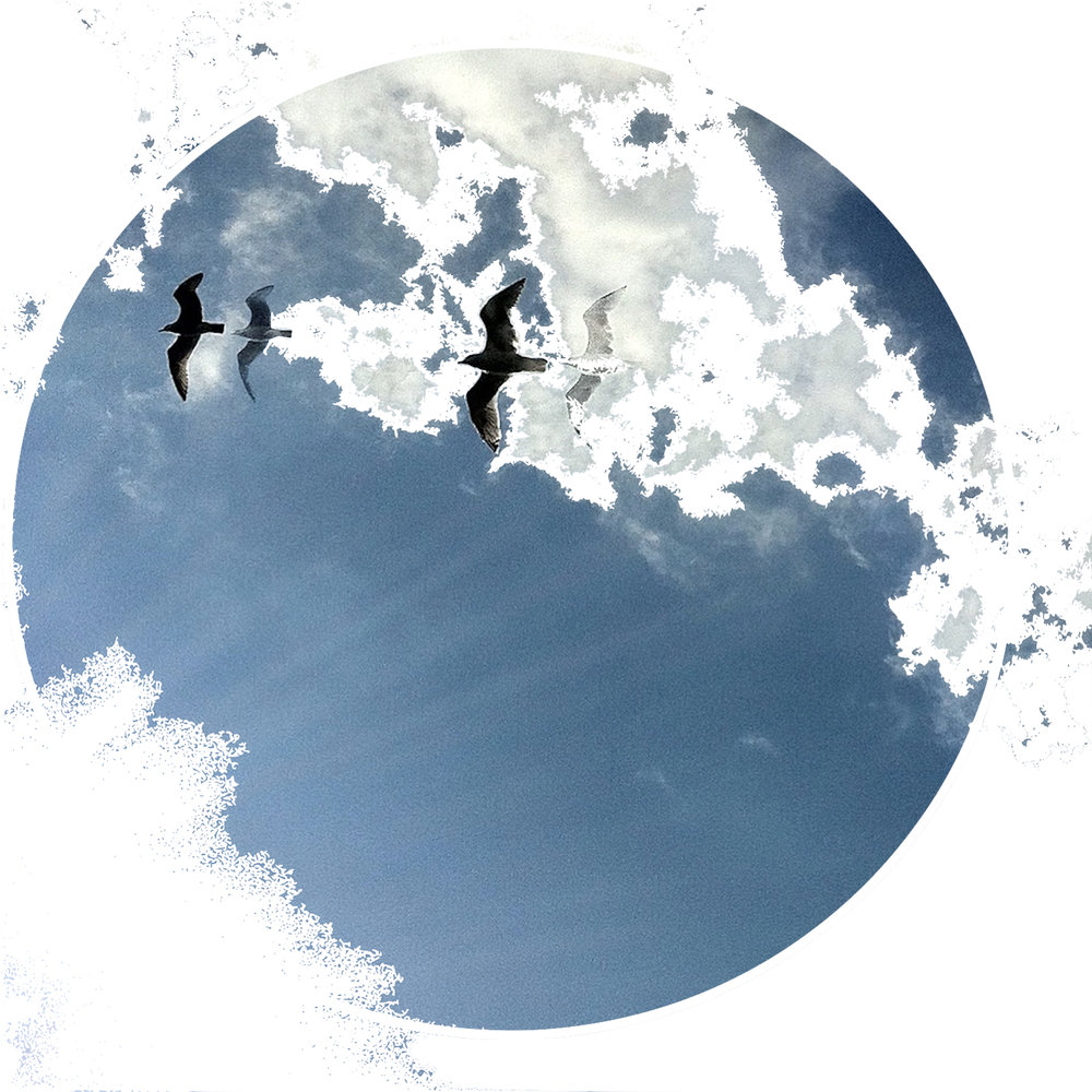 humanKINDER-birds-moon-logo-2016.jpg