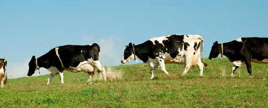NH-Dairy-Farms.jpg