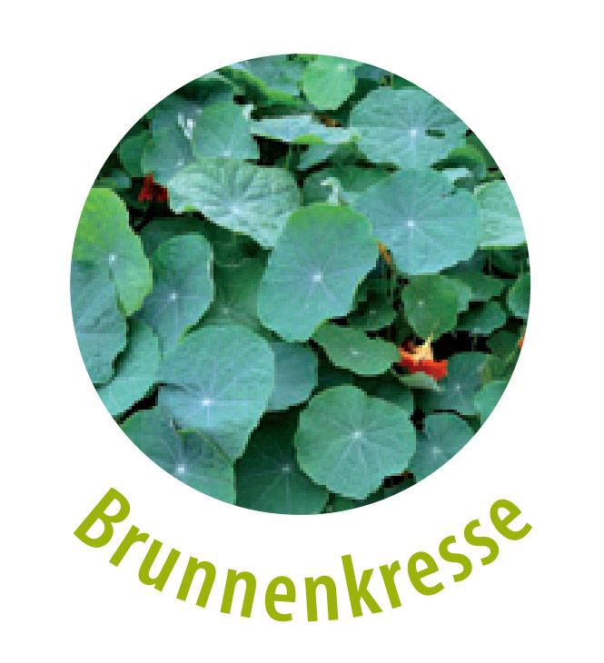 Die Brunnenkresse ist eine Pflanzenart und wird häufig als Gemüse verwendet. Diese Pflanze ist ein wichtiger Vitaminspender und wirkt Vitaminmangel und Frühjahrsmüdigkeit entgegen. Die Brunnenkresse wirkt unter anderem anregend, antibakteriell sowie gegen unreine Haut, Ekzeme und Juckreiz.