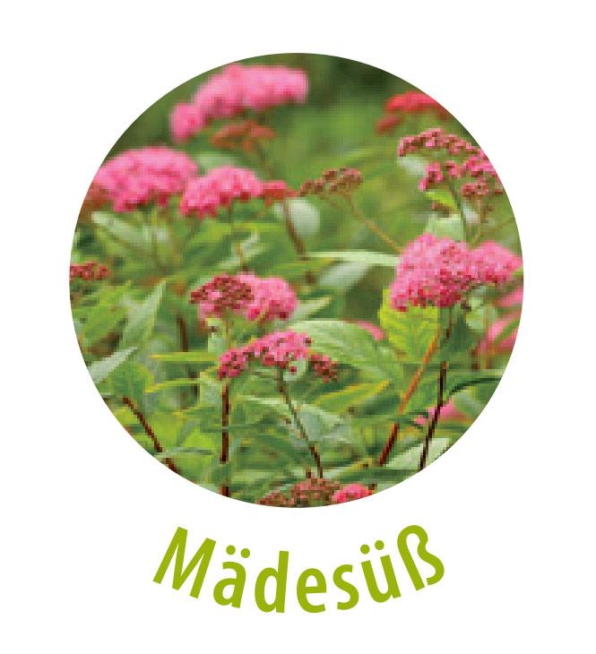 Das Mädesüß gehört zu der Familie der Rosengewächse. Diese Pflanze ist das Schmerzmittel der Natur, da sie Salicylate enthält, die der Körper in entzündungshemmende, schmerzstillende und schweißtreibende Acetylsalicyslsäure umwandelt.Das Mädesüß wird gegen Hautkrankheiten und unreine Haut eingesetzt.