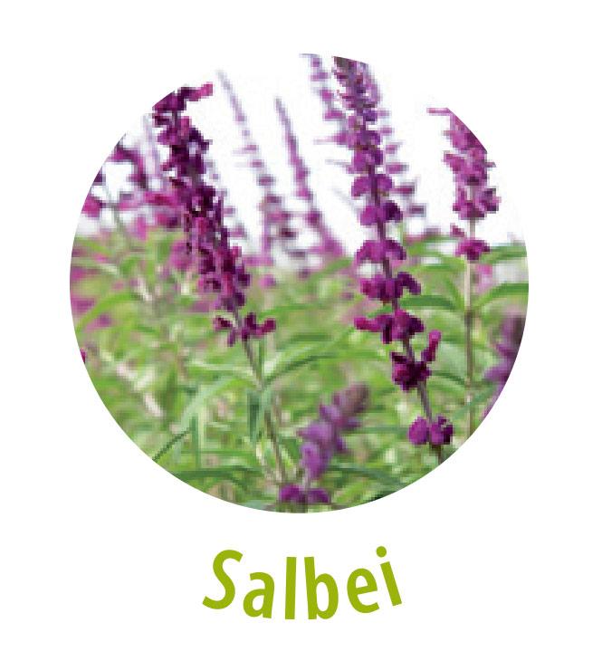 Salbei gehört zu der Familie der Lippenblütler und hat eine zusammenziehende sowie desinfizierende und schweißhemmende Wirkung. Salbei hat eine antibakterielle, entzündungshemmende und krampflösende Heilwirkung und wird zur Hautflege sowie als Mittel gegen fettige und unreine Haut eingesetzt.