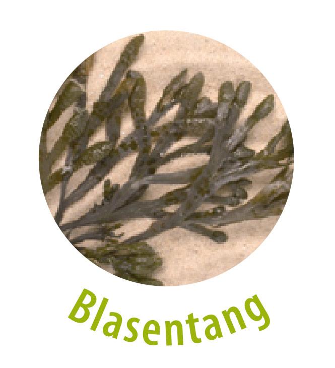 Der Blasentang ist eine Braunalge aus den Meeren der nördlichen, gemäßigten Breiten. Die Pflanze beinhaltet einen hohen Gehalt an Mineralstoffen und Spurenelementen und wirkt hautberuhigend. Blasentang sorgt für eine glatte sowie geschmeidige Haut und verbessert die Elastizität.