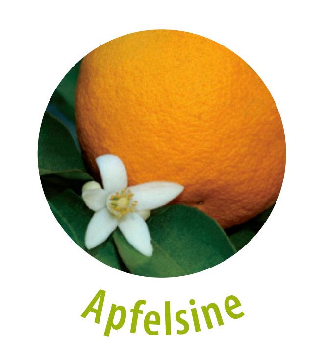 Die Apfelsine ist reich an Vitaminen und Mineralstoffen, weshalb sie das Immunsystem stärkt und vor Infektionen schützt. Darüber hinaus kann durch den hohen Vitamin-C-Gehalt das Eisen besser aufgenommen werden. Die Apfelsine strafft das Bindegewebe und wirkt gegen Falten.