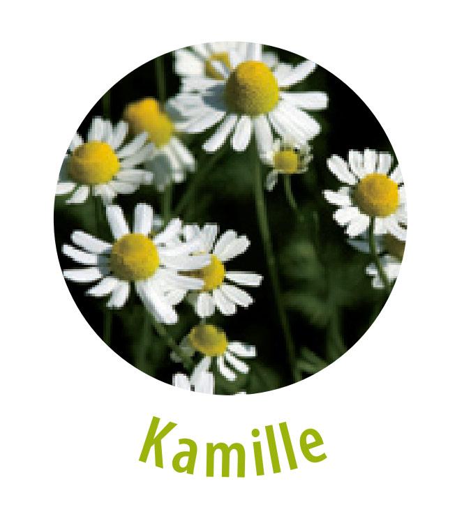 Die Kamille ist eine der beliebtesten und weitverbreitetsten Heilpflanzen. Diese Pflanze wirkt unter anderem antibakteriell, austrocknend, beruhigend, entzündungshemmend, krampflösend und schmerzlindernd.