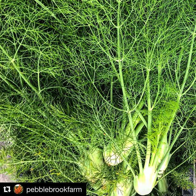 It's #fennel season! 😍😍 @pebblebrookfarm ・・・ Baby Fennel.... on the menu at @wildroots_vt ! . . #farmtotable #vermontfarm #vermontrestaurant #eatvt #knowyourfood #knowyourfarmer