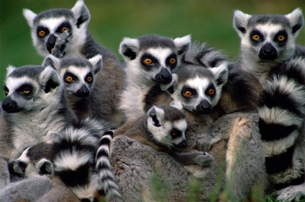 Day-4-Madagascar-family-holiday.jpg