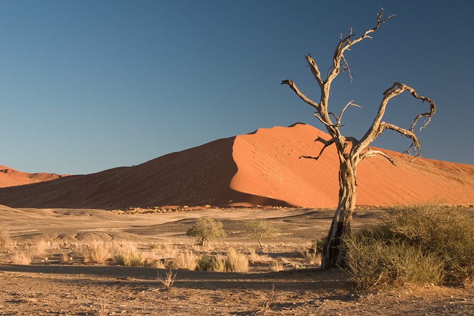 Thorn_Tree_Sossusvlei_Namib_Desert_Namibia_Luca_Galuzzi_2004a.png