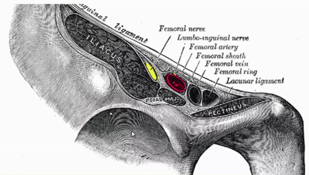 FASCIA ILIACA COMPARTMENT BLOCK