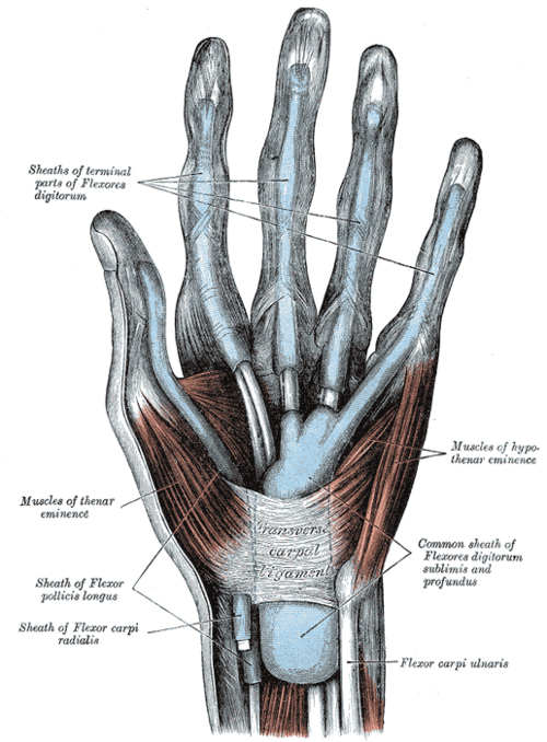 Nerve Blocks Of The Hand And Wrist Down East Emergency Medicine