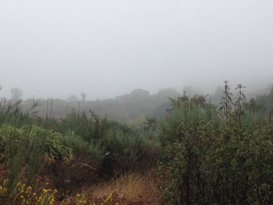 The ruin of Quinta do Verissimo looming up in the Autumn mist
